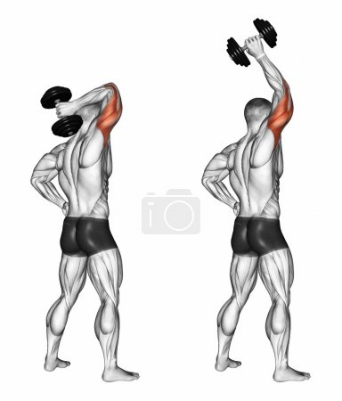 Photo pour Bras d'extension avec un haltère derrière la tête. Exercice pour la musculation Les muscles cibles sont marqués en rouge. Étapes initiales et finales. Illustration 3D - image libre de droit