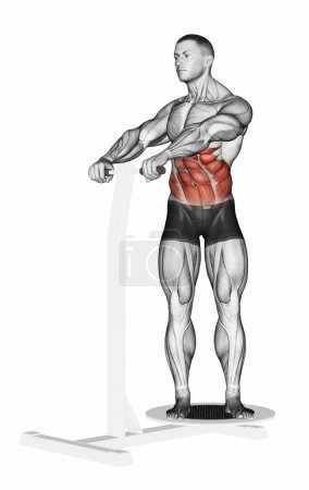 Photo for The rotation of the trunk, standing on the simulator Twist. Exercising for bodybuilding Target muscles are marked in red. 3D illustration - Royalty Free Image