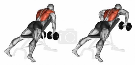Incline bench two arm dumbbell row. Exercising for...