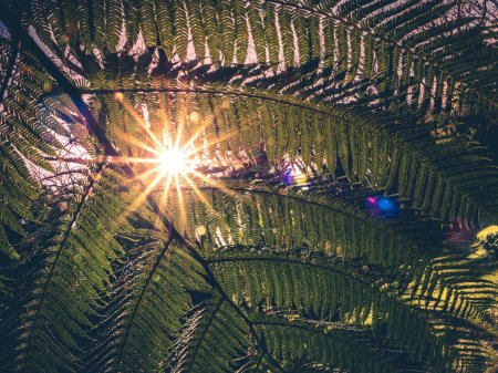 Fern leaf and sunrays
