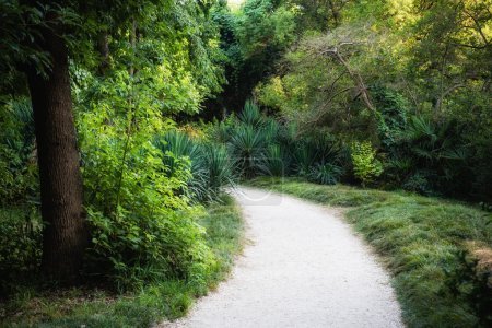 path between trees and bushes in the Park
