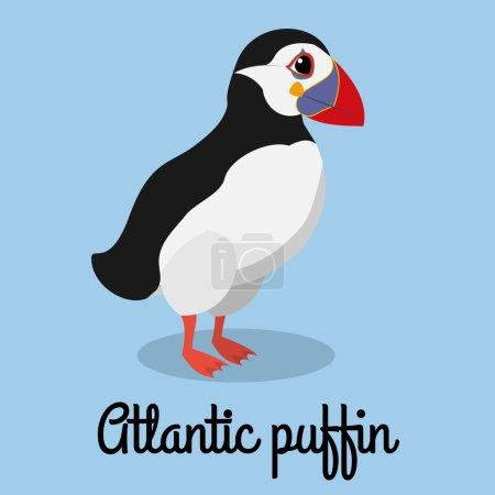 Illustration pour Illustration en couleur de macareux de dessin animé. Vecteur d'oiseaux stock . - image libre de droit