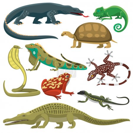 Reptiles animals vector set.