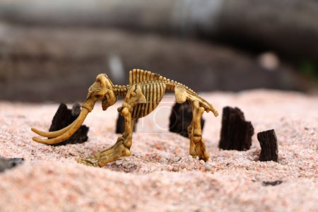 A child's toy. The mammoth skeleton on the sand.