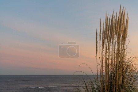 Photo pour Haute herbe de plage se balançant dans le vent avec belle plage et paysage océanique au lever du soleil - image libre de droit