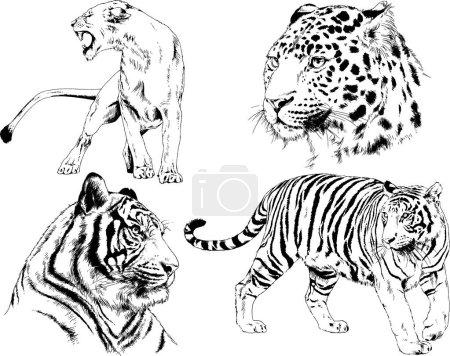 Illustration pour Dessins vectoriels esquisse différents prédateurs, tigres lions guépards et léopards sont dessinés à l'encre à la main, des objets sans fond - image libre de droit