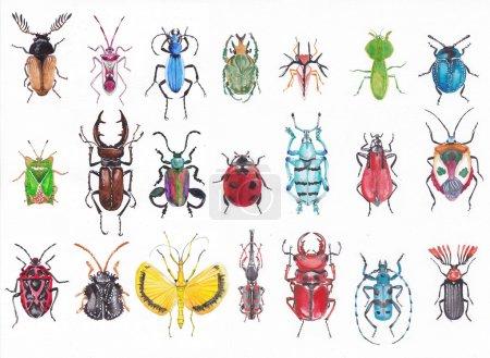 Photo pour De nombreux scarabées sur fond blanc exécutés à l'aquarelle . - image libre de droit