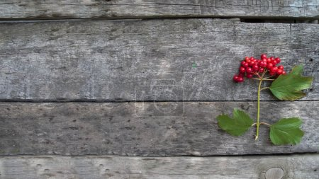 viburnum on a wooden background, for an inscription