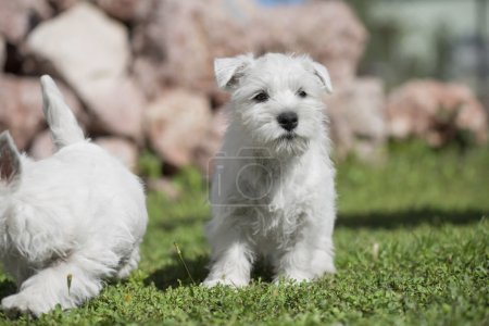 puppies standing on grass