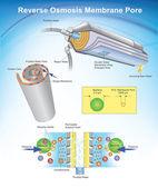 Reverse Osmosis Vector Arts illustration