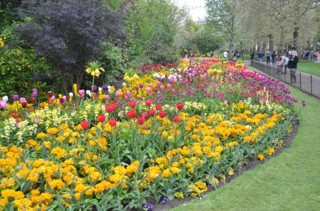 Colorful flowers at St James's Park in London