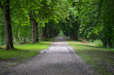 green alley at Chateau de Chenonceau