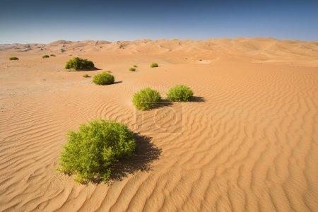 Photo pour Vert herbe Liwa désert, Abu Dhabi, Émirats Arabes Unis - image libre de droit