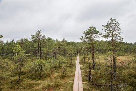 landscape of central Estonia